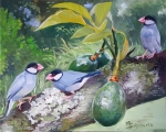 Java Sparrows in an Avocado Tree