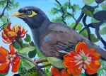 Mynah Bird in a Coral Tree