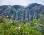Koolau Orchids