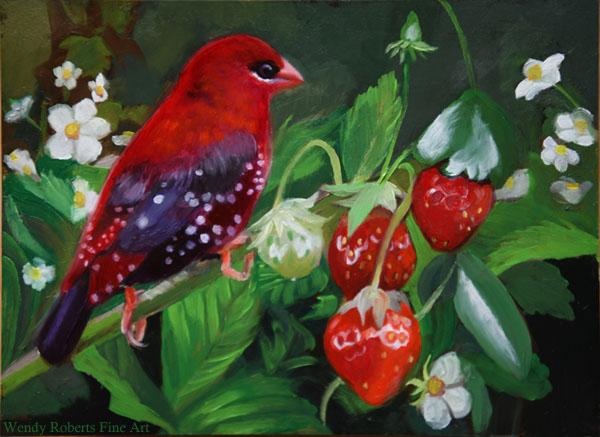 Strawberry Finch