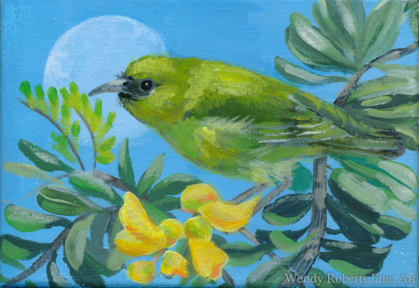 Amakihi in a Mamane Tree by Wendy Roberts