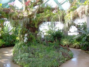 Denver Botanical Garden's Tree of Orchids and Epiphytes