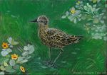 Fall Plover by Wendy Roberts