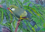 Red Billed Leiothrix by Wendy Roberts