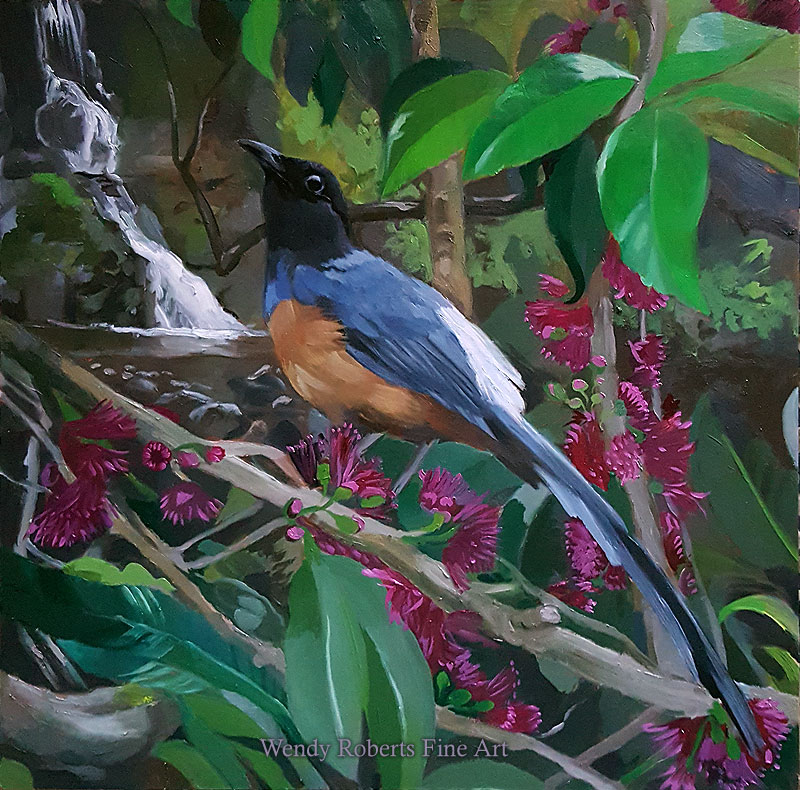 Shama Thrush in a Mountain Apple Tree by Wendy Roberts