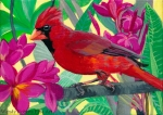Cardinal in a Plumeria Tree