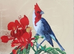 Red Crested Cardinal with Poinciana Flowers