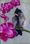 Baby Bulbul on Orchids