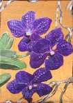Violet Vanda Orchids