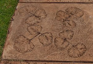 Kauai Allerton Botanical Sidewalk