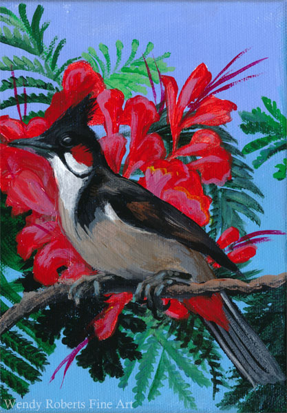 Red Whiskered Bulbul in a Poinciana Tree