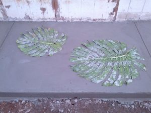 Monstera in the cement
